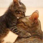 Very cute cat hd wallpapers (1)