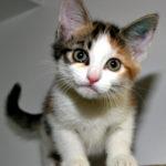 hd cat wallpapers