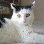 lovely-cats-wallpaper