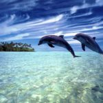 Beautiful Download free wallpapers for mobiles