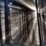nature trees HD Pics