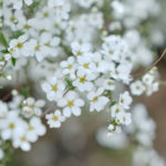 small flowers wallpapers